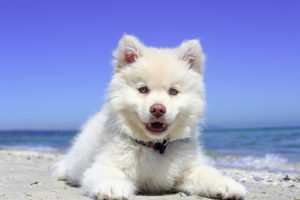 Organic Sulfur For Dogs & Other Pets
