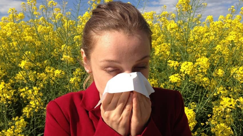 Best MSM For Allergies: 2019 Buying Guide & Review - Organic